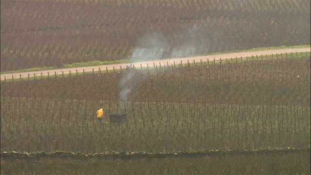 vídeos y material grabado en eventos de stock de ws ls ha farmer working in vineyard / burgundy, france - oficio agrícola