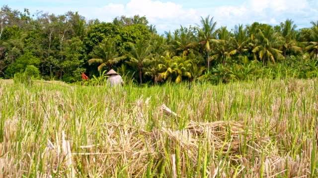 slo mo farmer working on rice field - balinese culture stock videos & royalty-free footage