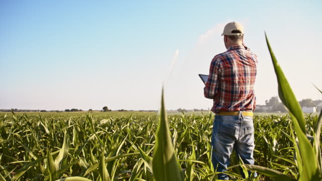 Farmer working with a digital tablet in the field