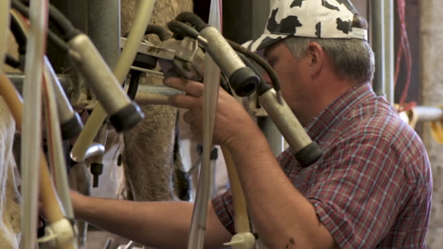 farmer works in milking shed on his dairy farm - dairy product stock videos & royalty-free footage