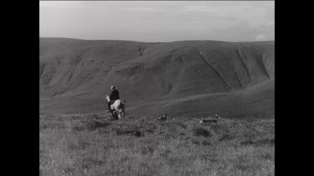 montage farmers and sheepdogs herding flock of sheep / aberystwyth, wales - 1931 stock videos & royalty-free footage