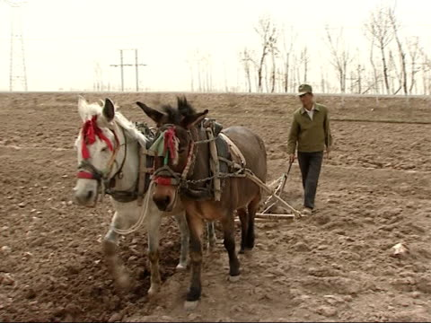 Farmers and workers in paddy fields More of man with horsedrawn plough digging up earth in paddy field man standing in irrigation channel water...