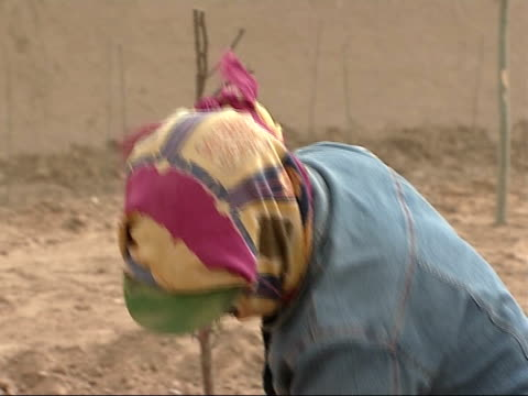 farmers and workers in paddy fields more of the same planting trees shovelling soil workers applying redcoloured liquid to newly planted trees with... - asian style conical hat stock videos & royalty-free footage