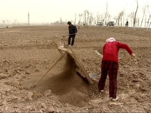 farmers and workers in paddy fields woman farm worker sifting soil and breaking up soil clumps with spade various of man and woman working in paddy... - asian style conical hat stock videos & royalty-free footage