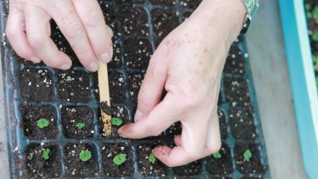 vídeos de stock, filmes e b-roll de os agricultores plantam mudas. - raiz