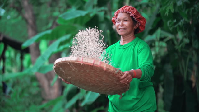 slo mo farmers are working on her farm. - thailand stock videos & royalty-free footage