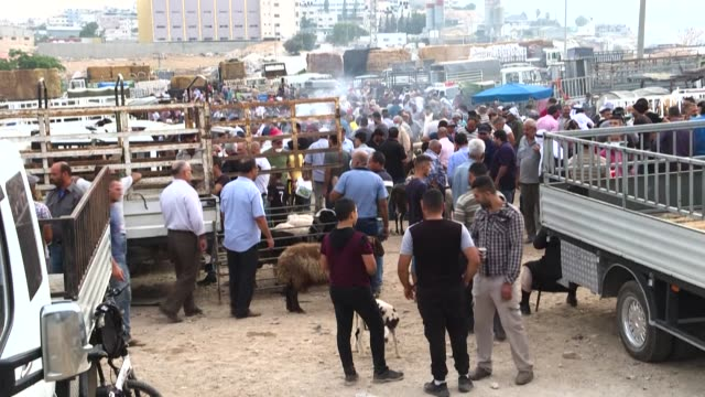 WSB: Palestinian livestock farmers troubled ahead of Eid al-Adha