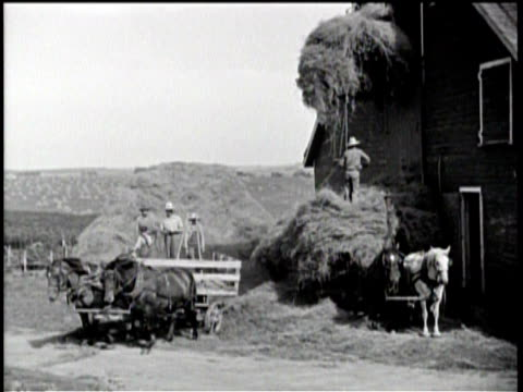 farmers bailing hay / farmers moving hay into a barn / a little girl in a white dress walking through a healthy field / a farmer and a boy walking... - hay field stock videos & royalty-free footage