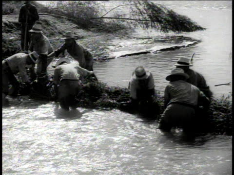 1949 MONTAGE farmers building dam with branches / Colorado River, United States