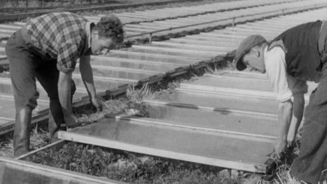 vidéos et rushes de 1937 montage farmers caring for crops in the field and in row-level greenhouses and weighing eggs / essex, england - 1930