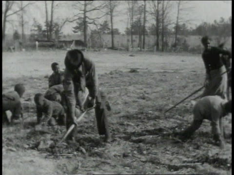 1939 ms farmers digging in field / lowndes county, alabama, united states - farm worker stock videos & royalty-free footage