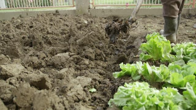 vídeos y material grabado en eventos de stock de agricultores desenterrando la huerta, en tiempo real - bieldo equipo agrícola