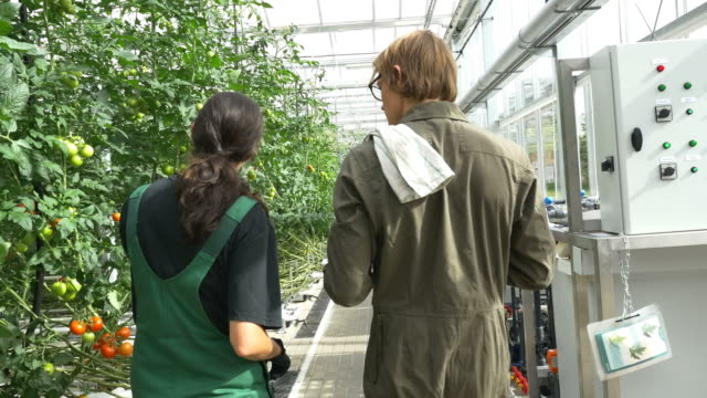 farmers discussing by tomato plants in greenhouse - bib overalls stock videos & royalty-free footage