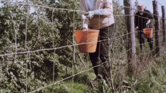MONTAGE Farmers driving fence posts and installing wire fencing, gardeners fertilizing, maintaining and planting hedges, and stone wall in rural field / United Kingdom