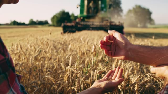 farmers examining wheat with combine harvester harvesting in background,slow motion - tractor stock videos & royalty-free footage