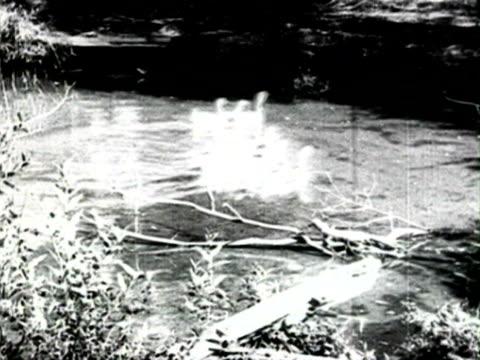 ms farmers feeding animals audio/ russia - 1925年点の映像素材/bロール