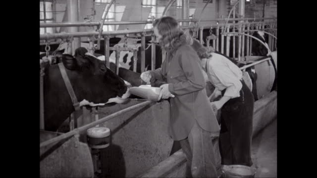 ms farmers feeding cows in barn / united states - responsibility stock videos & royalty-free footage