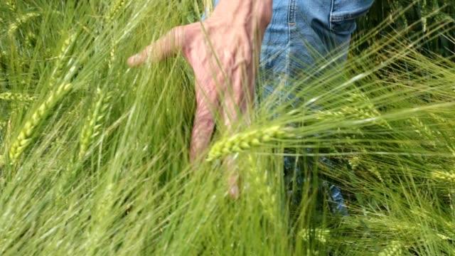 vidéos et rushes de main du fermier au blé. - eastern european culture