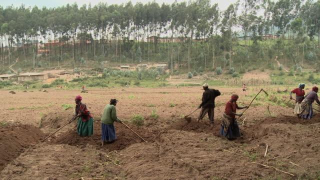 Farmers hand till the soil in Burera District.