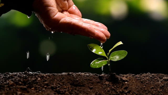 farmer's hand watering a young plant slow motion - watering stock videos & royalty-free footage