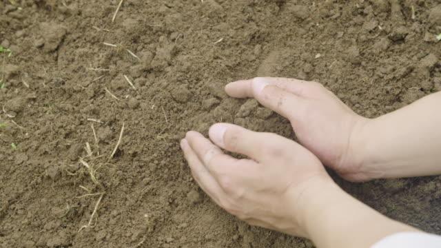 vidéos et rushes de farmer's hands holding brown soil / uiseong-gun, gyeongsangbuk-do, south korea - soil