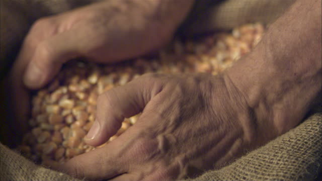 slo mo cu selective focus farmer's hands holding corn / vienna, austria - seed video stock e b–roll