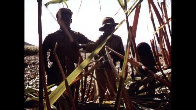 MONTAGE Farmers harvest sugar cane crop in Mauritius