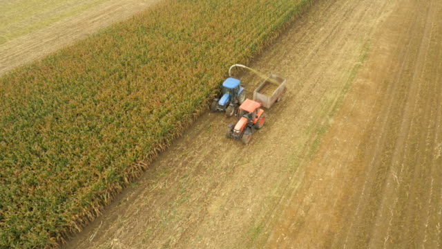 aerial farmers harvesting corn silage - corn crop stock videos and b-roll footage
