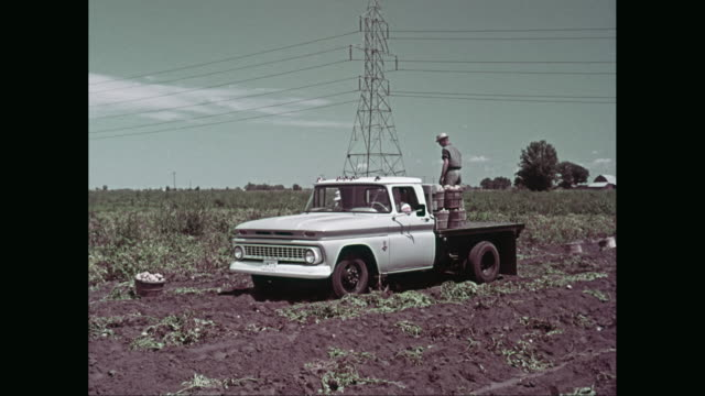 ws pan farmers harvesting potato / united states - farm worker stock videos & royalty-free footage