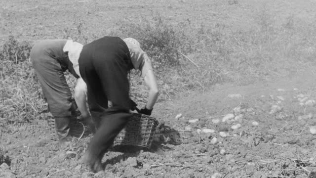 montage farmers harvesting their fields / united kingdom - farmer hay stock videos & royalty-free footage