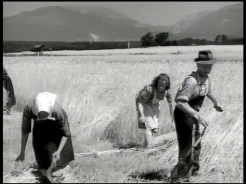 farmers harvesting wheat. vs workers cutting field. tractors plowing field. machine rake plowing dirt. countryside, tito's five-year plan - agricultural equipment stock videos & royalty-free footage
