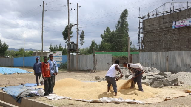 vídeos y material grabado en eventos de stock de farmers in ethiopia - el cuerno de áfrica