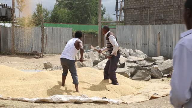 vídeos de stock e filmes b-roll de farmers in ethiopia - corno de áfrica