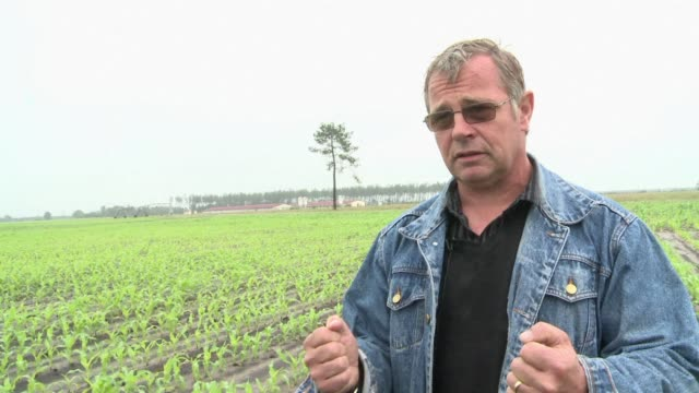 farmers in frances southwest are losing hope of a bumper harvest as wet weather continues to blight the region clean french floods hit farmers hard... - bumper stock videos & royalty-free footage
