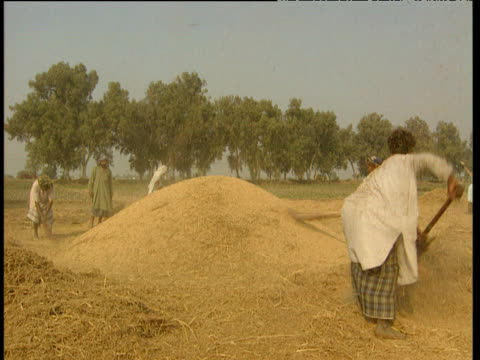 Farmers in heat haze sorting chaff from grain during wheat harvest Pakistan