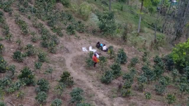 farmers in peru are abandoning growing coffee for more resilient crops as they are hit by diseases triggered by climate change and historically low... - exhilaration stock videos & royalty-free footage