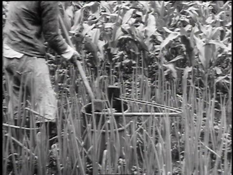 farmers in rice paddy / farmer turning irrigation wheel - 1947 stock videos & royalty-free footage