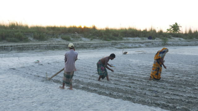 farmers in rural bangladesh plough land by hand which has been freshly revealed by receding river levels peanuts are planted in the furrows as the sunsets over the delta - plowed field stock videos & royalty-free footage