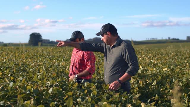vídeos y material grabado en eventos de stock de agricultores en cultivo de soja. - américa del sur