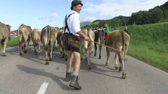 ms pov farmers leading cattle down from mountains  / schã¶llang, bavaria, germany - arbeitstier stock-videos und b-roll-filmmaterial