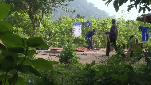 farmers living in ivory coasts protected forests are being evicted as part of the countrys efforts to combat deforestation and climate change - côte d'ivoire stock videos & royalty-free footage