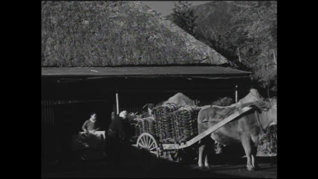 farmers load stacks of tobacco leaves onto an oxcart in hatano, kanagawa. - 煙草製品点の映像素材/bロール