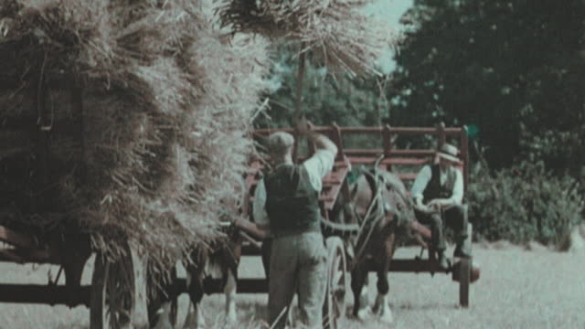 stockvideo's en b-roll-footage met 1938 montage farmers loading bound sheaves of hay onto horse-drawn cart / united kingdom - 1938