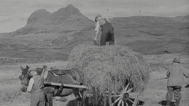 1943 montage farmers loading hay onto horse-drawn wagon, and couple forming windrows using hay rakes / scotland, united kingdom - scotland stock videos & royalty-free footage