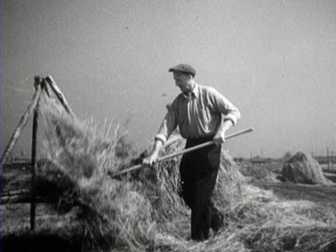 farmers making hay using insecticide to protect their harvest and ramming potatoes - bonde jordbruksyrke bildbanksvideor och videomaterial från bakom kulisserna
