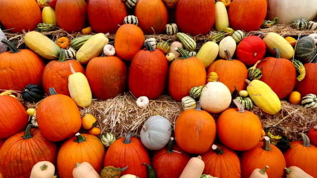Marché paysan Halloween Thanksgiving