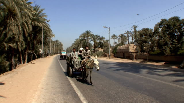 ws pan farmers on cart drawn by donkey along street, fayoum, egypt - エジプト点の映像素材/bロール