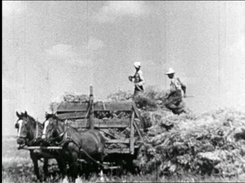 b/w 1940 farmers on haywagon with horses pitching hay - 干草用熊手点の映像素材/bロール