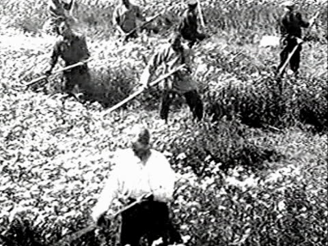 farmers pearing wheat - former soviet union stock videos & royalty-free footage