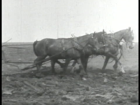 Farmers picking potatoes MS Horses pulling plow harrowing VS Horses pulling harvester machine on wheat field World War I WWI war effort home front...